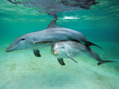 Mora i okeani Delfini