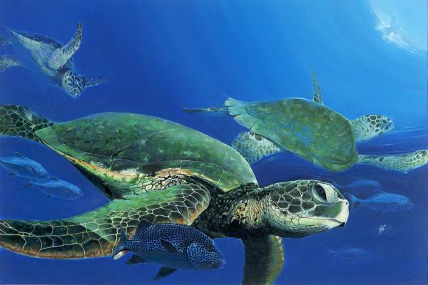 Mora i okeani Morske.kornjace