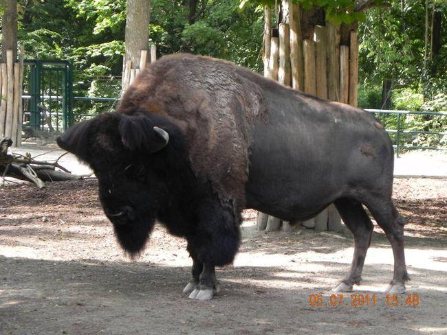 Galerija zoo vrta u Beču